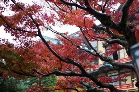 秋の箱根へ