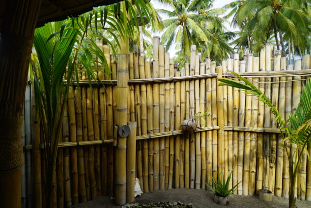 Coconut Garden in Maumere 05