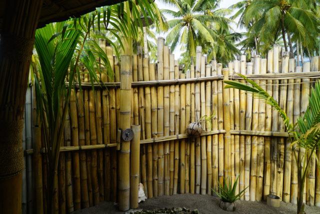 Coconut Garden in Maumere 05