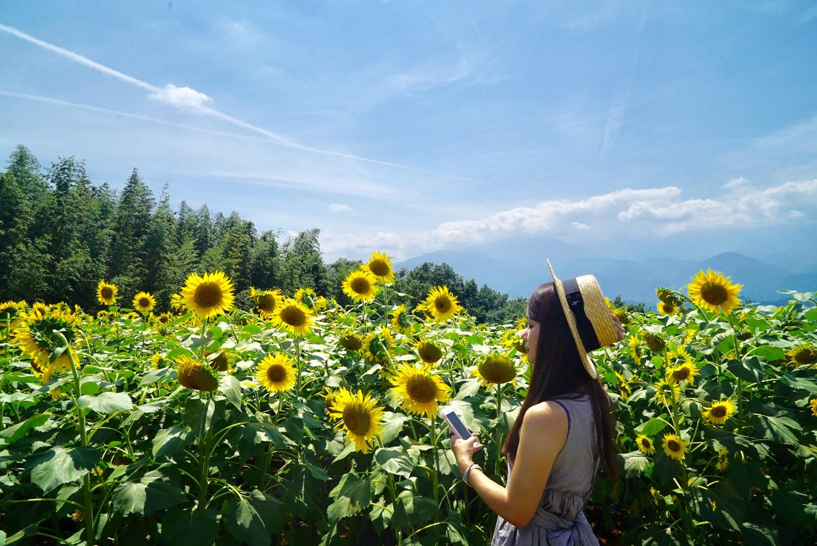 【まとめ】夏の絶景ポイント、山梨 明野ひまわり畑